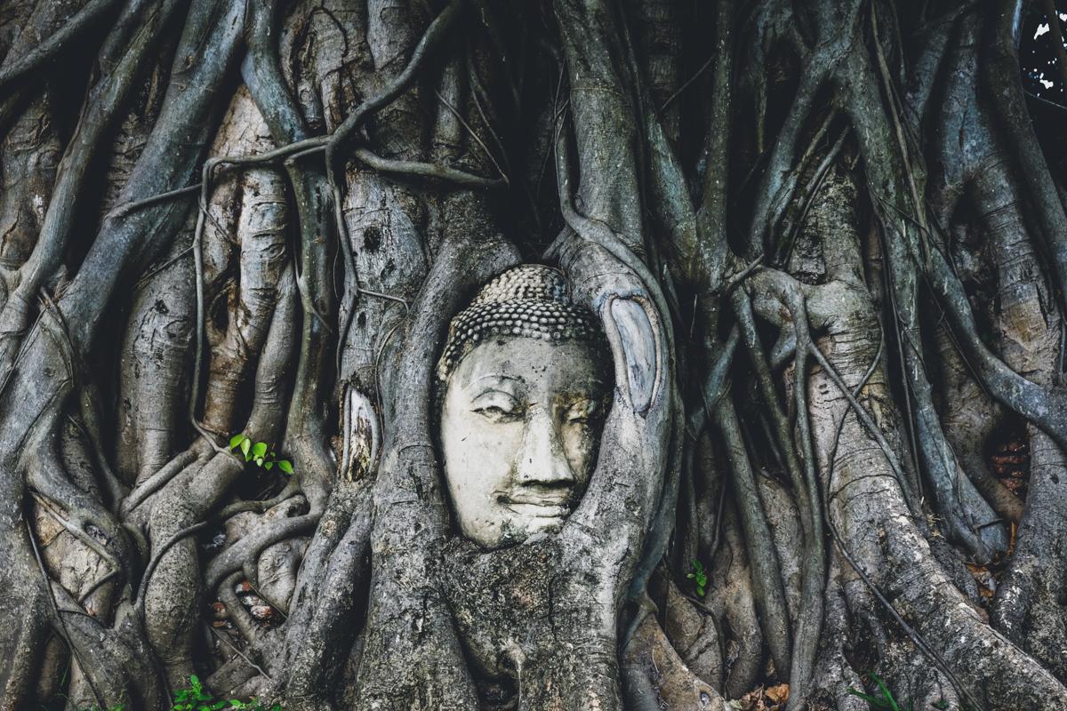 Ayutthaya Ruins Temples Thailand Buddha Tree Historical Park Kingdom Banyan Tree Statue Head