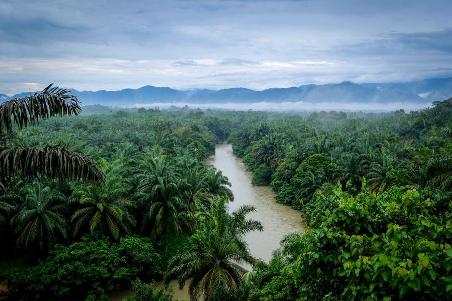 Tangkahan Palm Oil Plantation