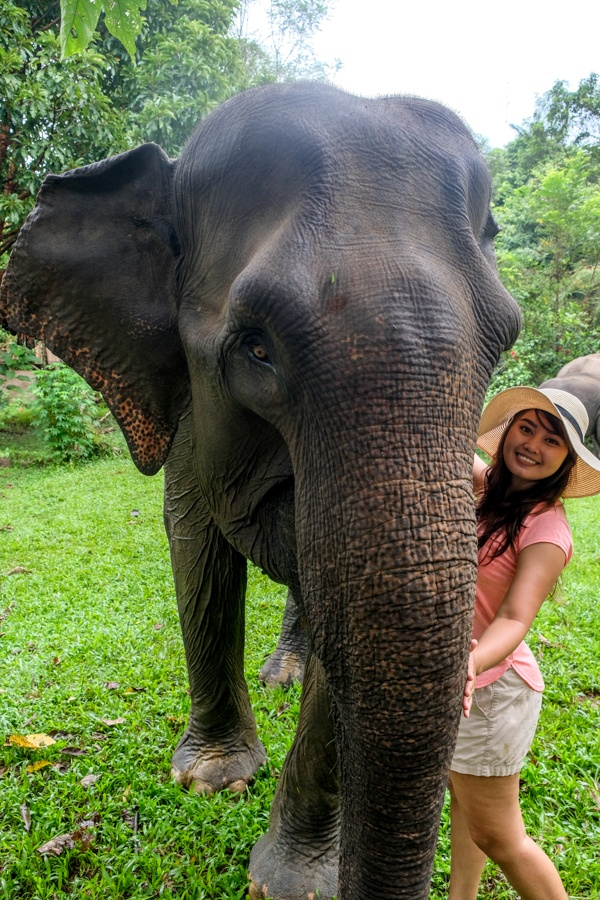 Tangkahan Elephant Sanctuary North Sumatra Indonesia