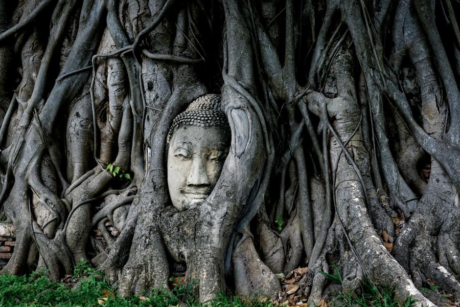 Ayutthaya Buddha Tree Banyan Ruins Temples Historical Park Bangkok Thailand