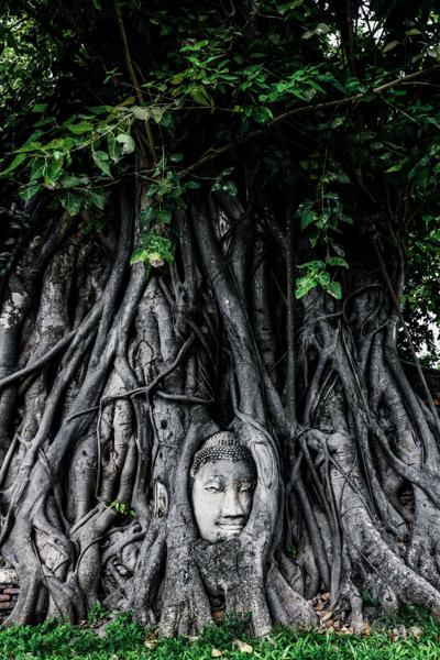 Ayutthaya Buddha Tree Banyan Statue Head Ruins Temples Historical Park Bangkok Thailand